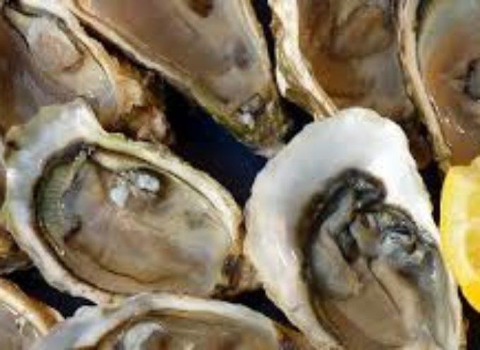 Ancora richiami di ostriche contaminate da biotossine paralizzanti. L'allerta arriva dal Ministero della Salute