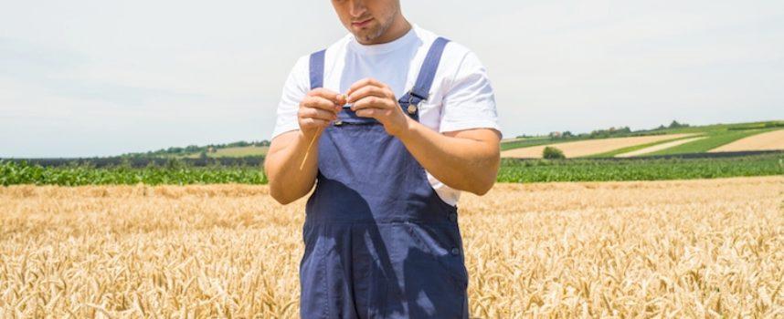 per i  Giovani agricoltori, parte l'esonero contributivo