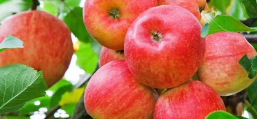 Il modo migliore per lavare via i pesticidi dalle mele? Acqua e bicarbonato