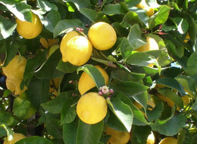 Congelare un limone e dire addio al cancro , al diabete e all'obesità