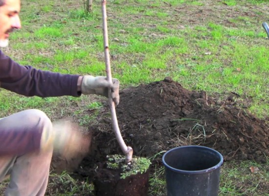 Come piantare un albero da frutto. Le tecniche corrette e i periodi migliori