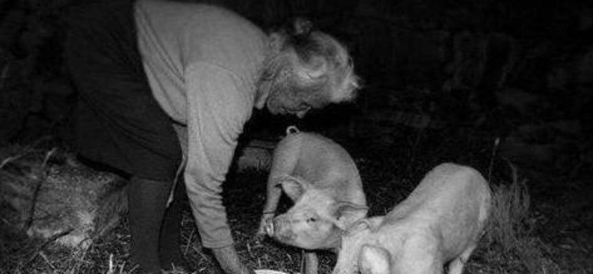 Al mattino presto per prima cosa si dava da mangiare agli animali
