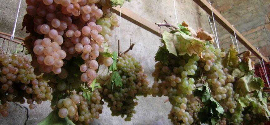 L'uva delle Feste.