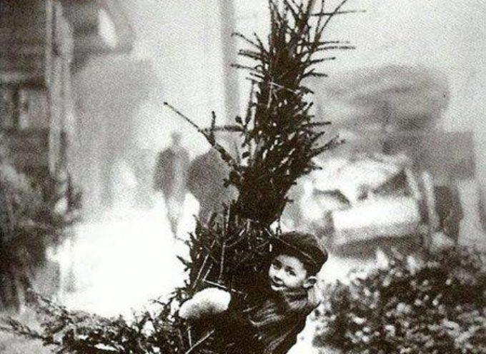 E' tempo di allestire l'albero di Natale…vero o finto?