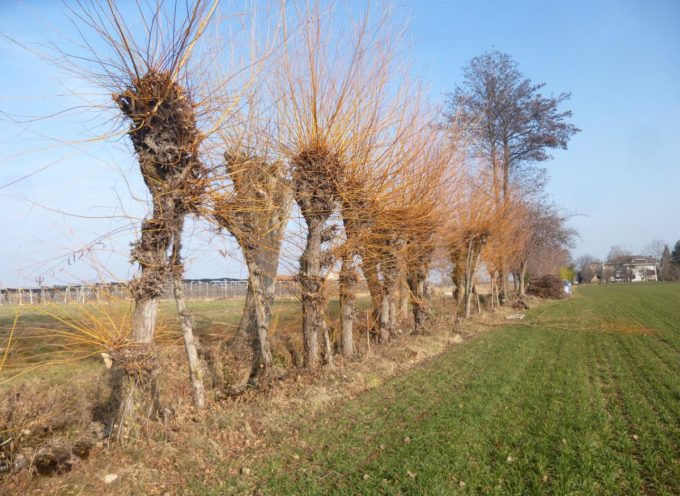 E' tempo di potature degli alberi