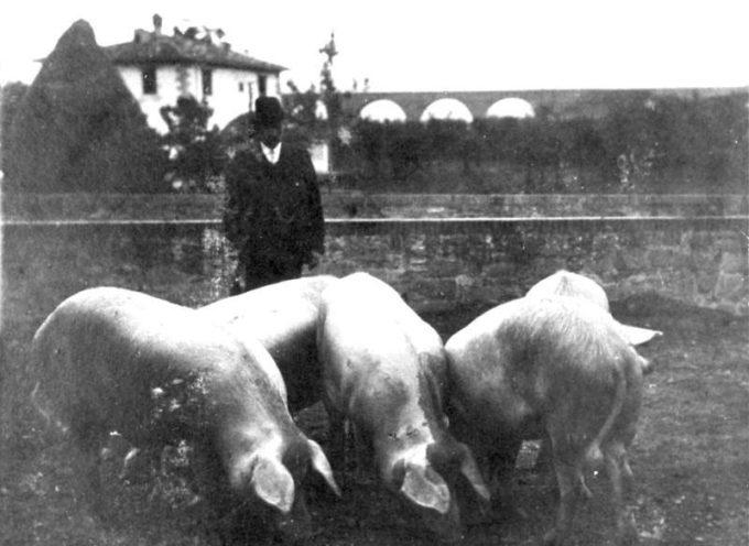 Dicembre è il tempo in cui si sacrificava il maiale