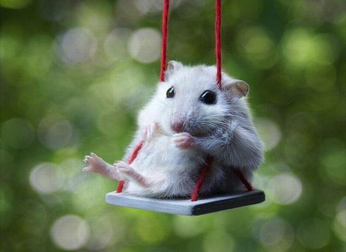 Alla ricerca del topolino che non c'è. alla scuola di lammari