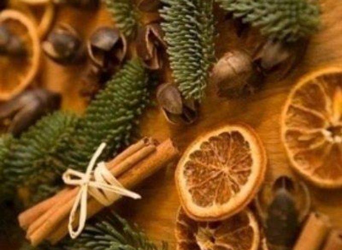 Le piante di Natale: un aiuto per il nostro benessere.