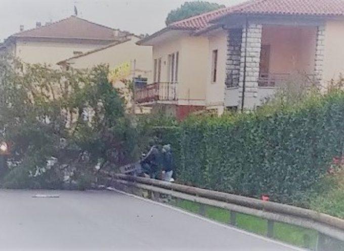un grosso albero cade sulla strada in via di tiglio