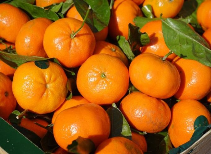 Clementine: abbiamo aspettato un poco, ma le notizie sono ottime