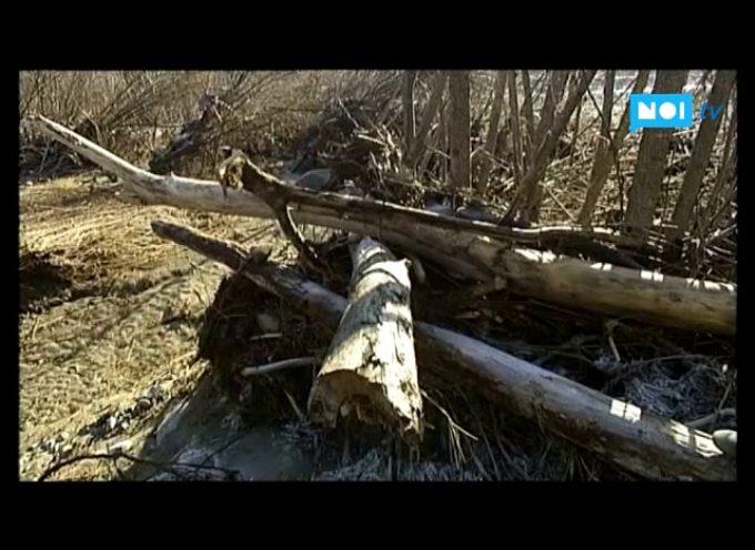 Questa legna è mia': il significato dei sassi lasciati sui tronchi portati dal fiume