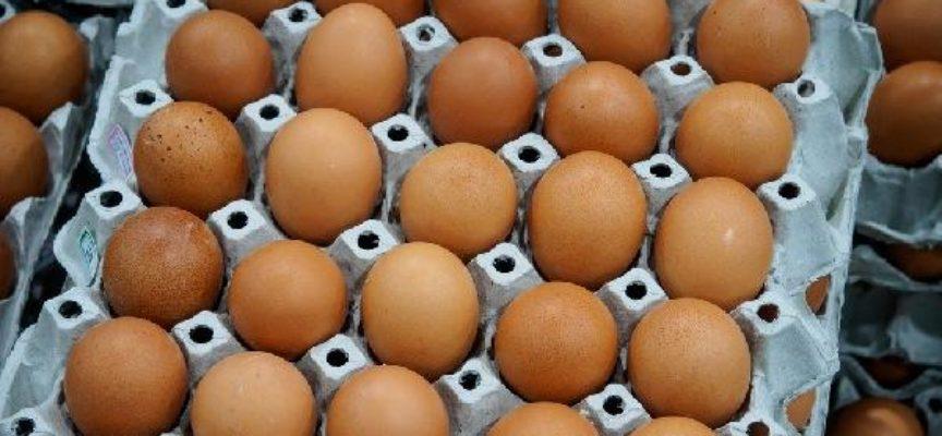 La crisi delle uova: sempre di meno in vendita e costi raddoppiati