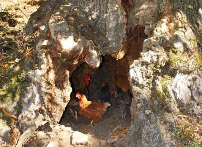 un pollaio in garfagnana
