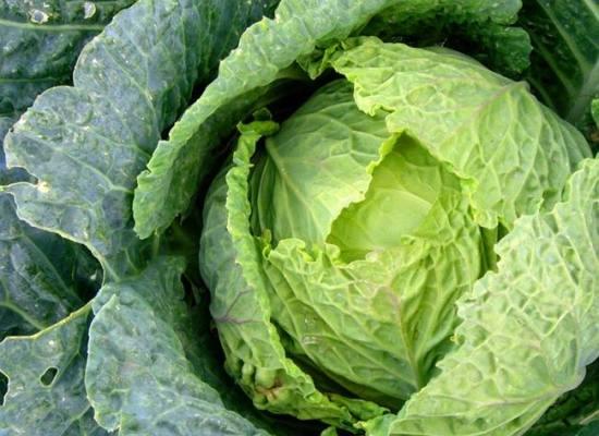 Le verdure di stagione: il cavolo verza.