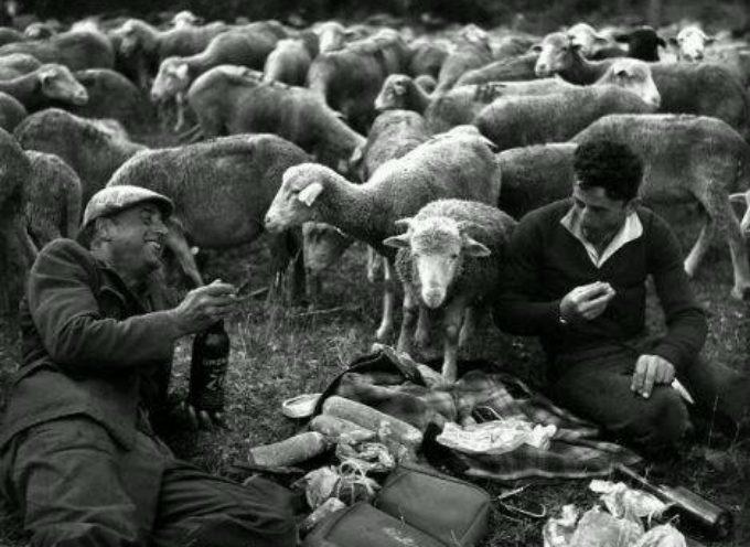 I pastori mangiavano sul prato, come faceva il loro gregge