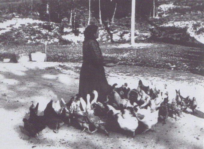 Le galline ovaiole: la ricchezza dell'Arzdòra.