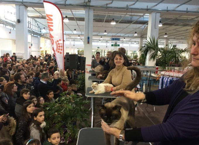 Gatti da tutta Europa nel weekend al Polo Fiere di Lucca