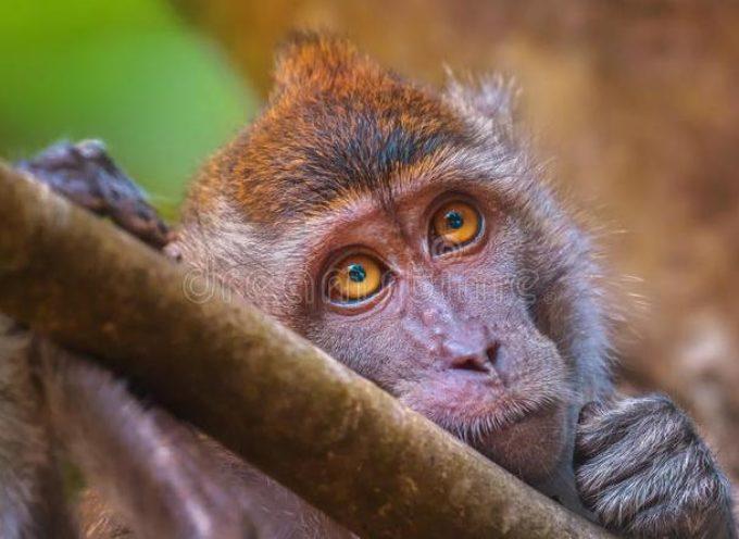 Nuovo scandalo per l'auto tedesca: nella bufera Bmw Daimler e VW per test sulle scimmie costrette a respirare i gas di scarico