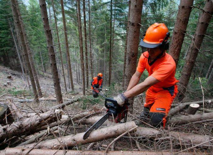 Nuove regole per i professionisti del taglio boschivo