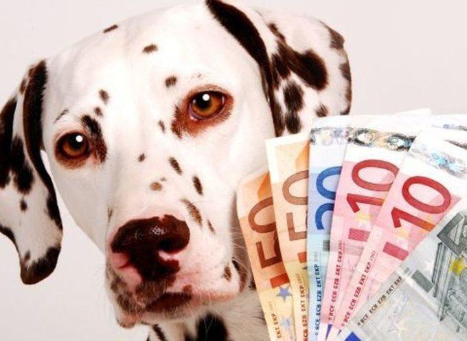 Bonus 500 euro per chi ha un animale? Nessuna bufala! Ecco come AVERLO