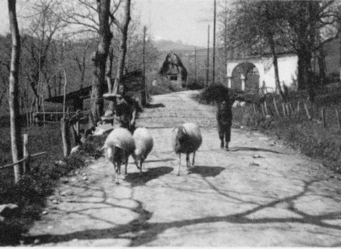 quando i contadini allevavano anche le pecore