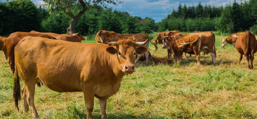 Allevamento biologico: gli spazi in cui vivono gli animali