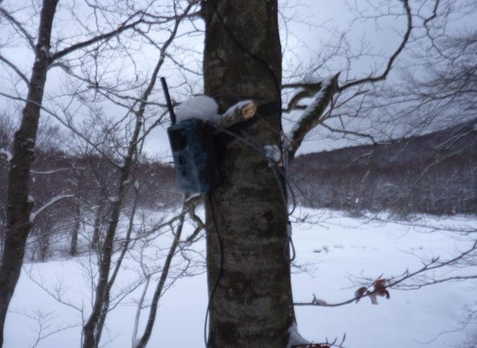 Al cinghiale nella riserva, bracconieri scoperti con fototrappola