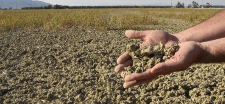 Agricoltura sempre più a rischio a causa della siccità