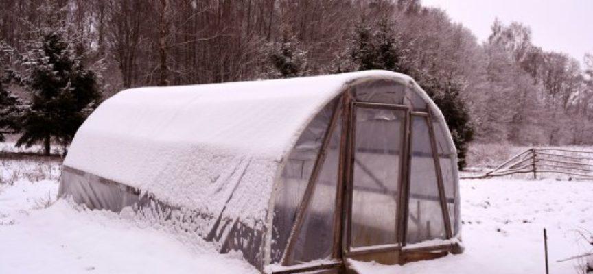 Cosa coltivare a febbraio: ecco tutte le colture