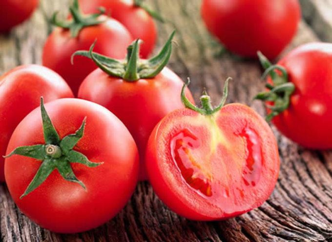 Come si coltiva il pomodoro