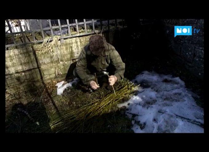 I segreti del salice nella maestosità dell'Alta Garfagnana