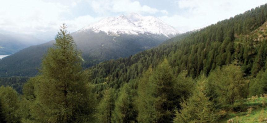L'Italia, paradiso botanico d'Europa