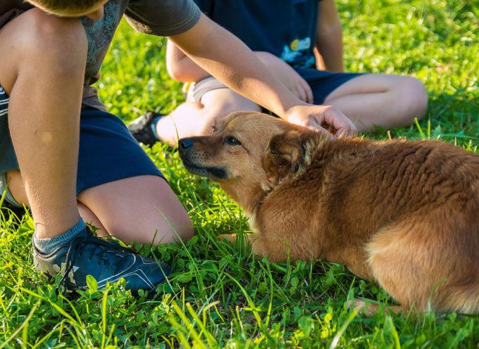 """Infanzia: """"Qua la zampa"""", arriva il minicorso per avvicinare i bambini al mondo dei cani"""