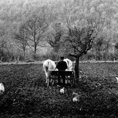 """"""" Tre cose vuole il campo: buon lavoratore, buon seme, buon tempo """""""