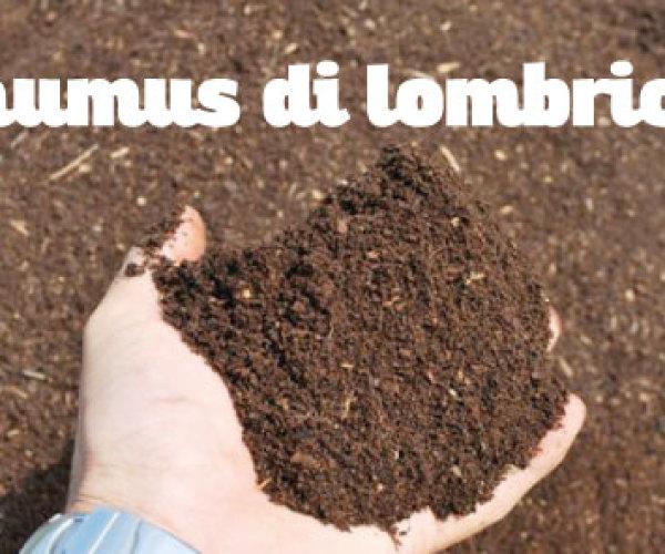 L'humus di lombrico, concime organico per l'orto biologico