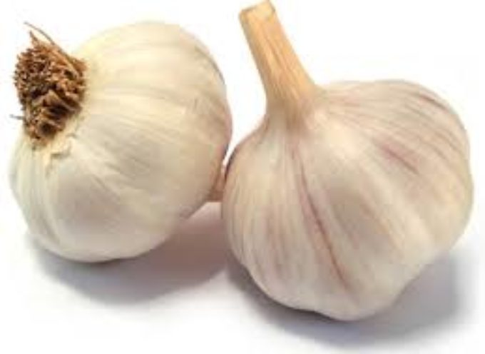 Come si coltiva l'aglio