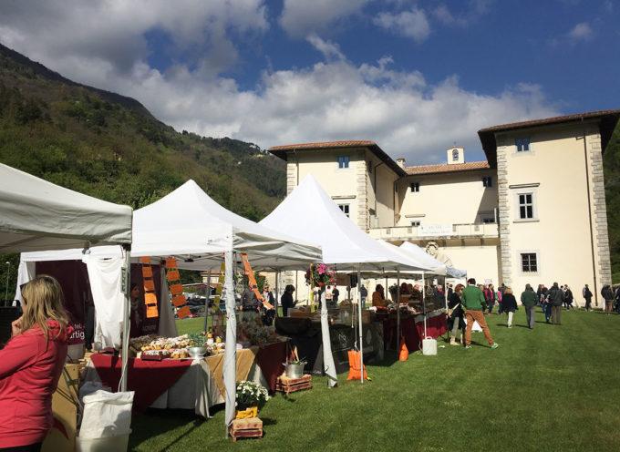 Enolia 2018:  gran finale con il convegno dedicato all'olivo quercetano