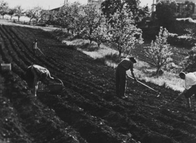 La semina del campo di patate.