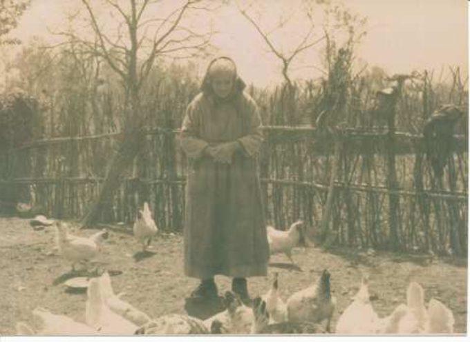 Le galline della nonna…
