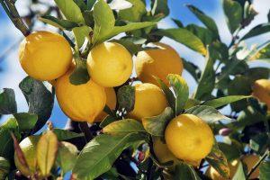 103753_limone