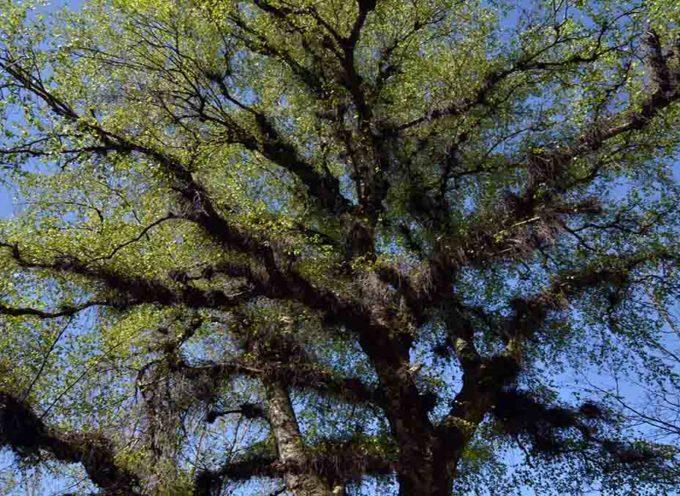 Teatro natura i fiori di S Zita e la magica betulla chiomata