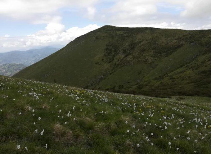 Escursione  su monte Prato fiorito