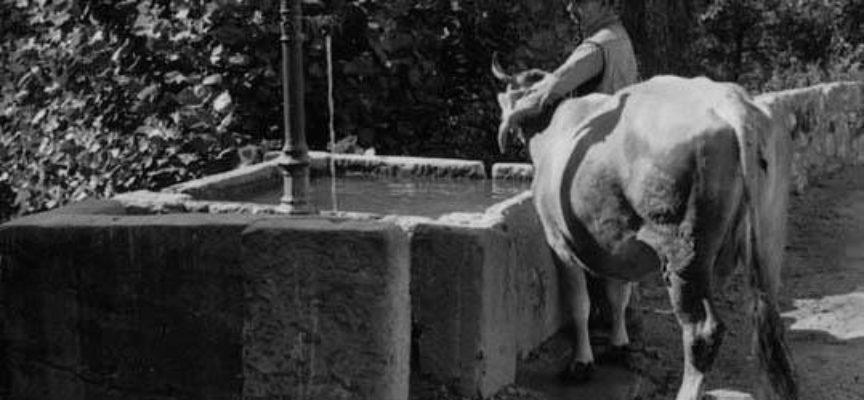 Alla fonte, Di buon mattino e al ritorno dal lavoro nei campi si portavano le bestie alla fonte: