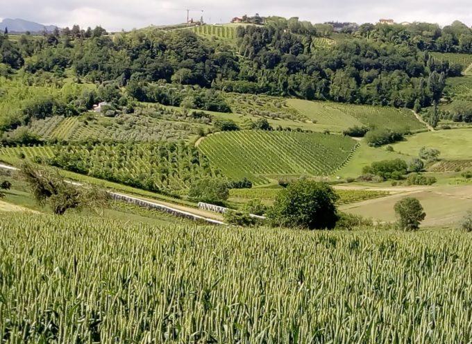 l'Italia, con i suoi 52,9 miliardi di fatturato, è la seconda potenza agricola del Vecchio Continente,