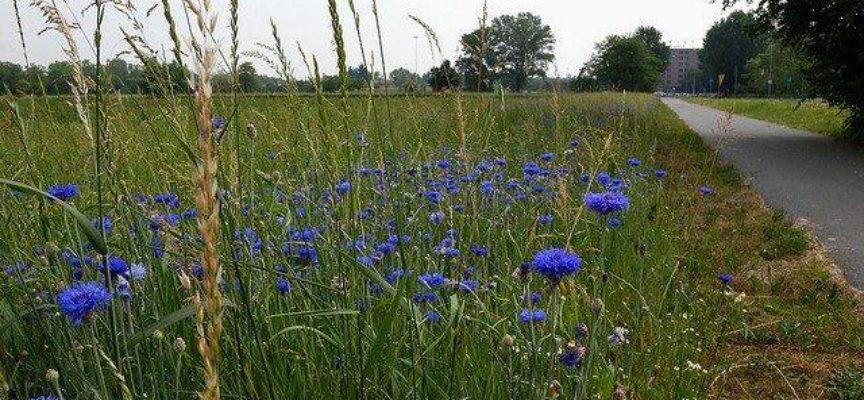 Il giardino azzurro: