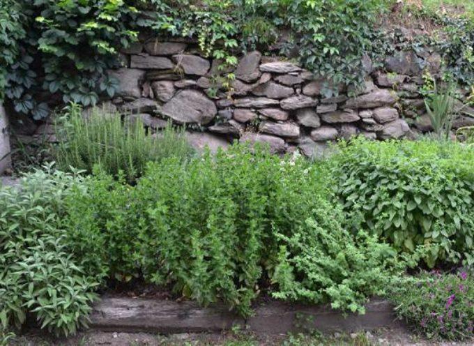 Le erbe aromatiche, erbe indispensabili.