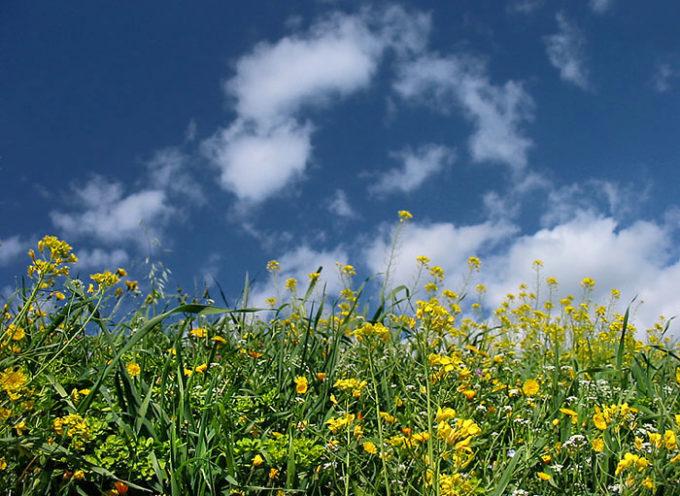 Allergia da polline, un  male di stagione