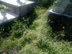 cimitero san ginese 2