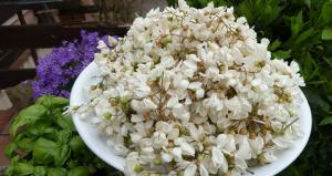 fiori_acacia_robinia