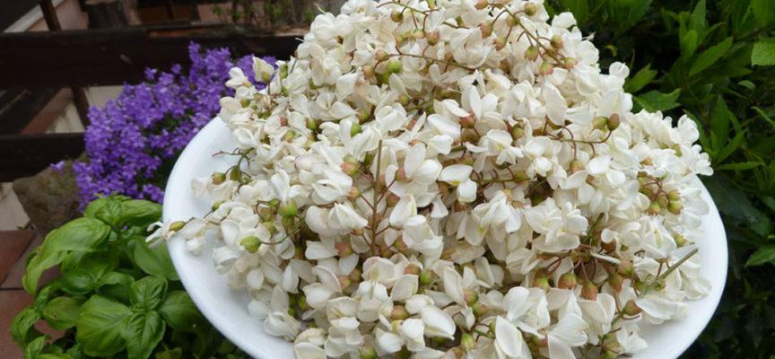 Maggio, il mese dei fiori; ecco come fare fritti quelli di acacia